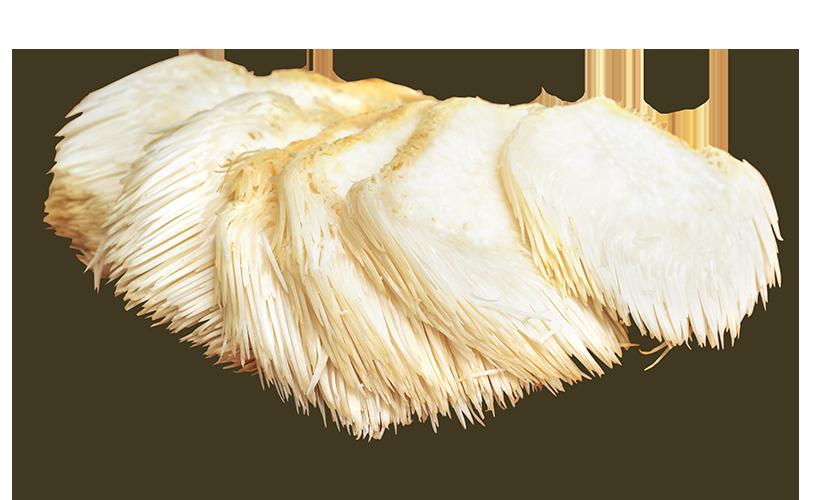 lions-mane-mushroom-01.png