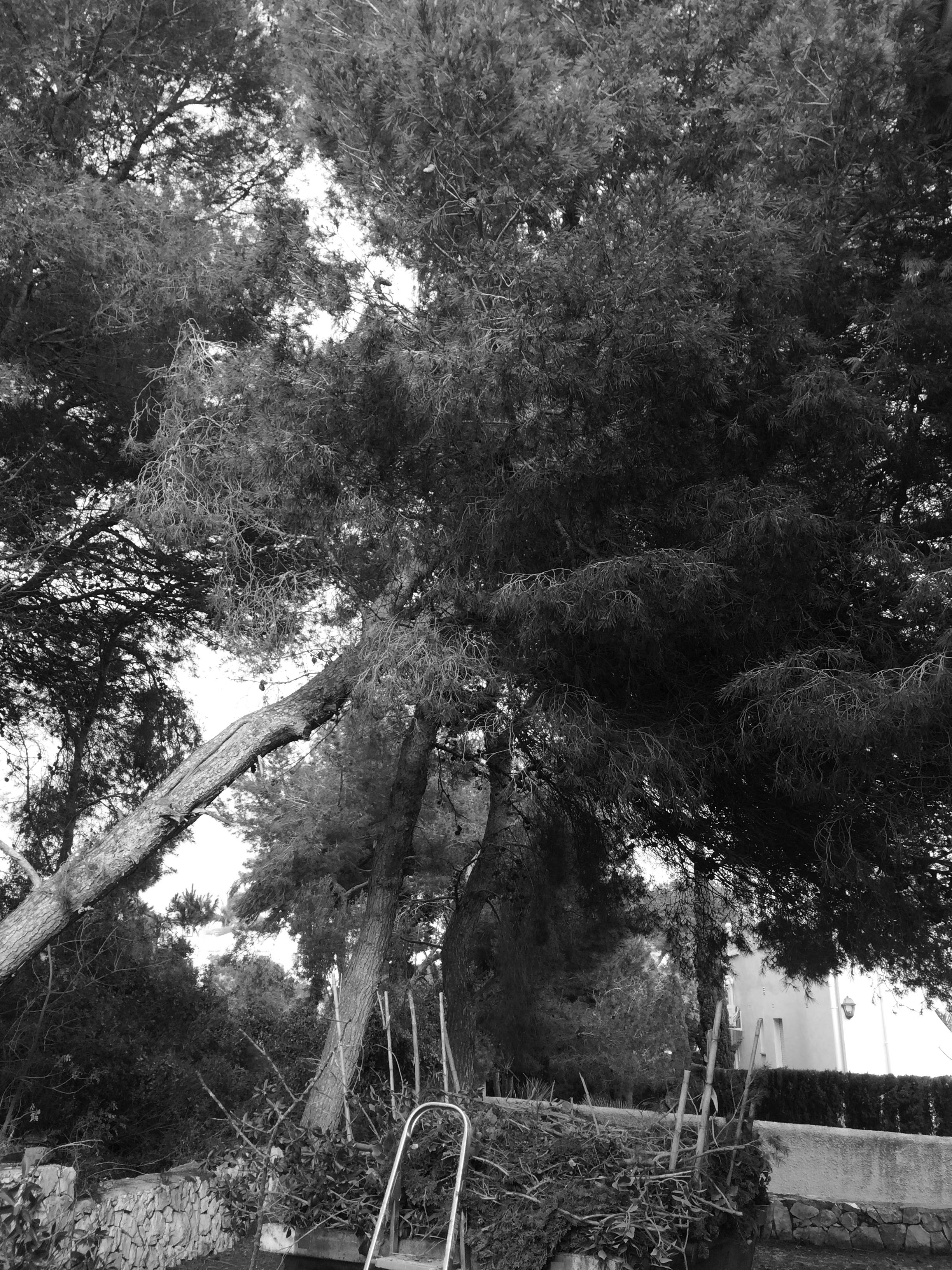 Jardin 15022017-13.jpg