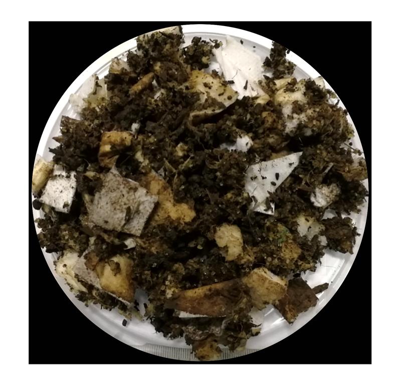 Figure 2: Nest Diaper & compostprior to test -