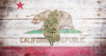 california-marijuana-351x185.jpg