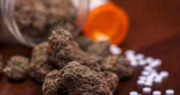 Legal_cannabis_equals_fewer_-pharmaceuticals-351x185.jpg