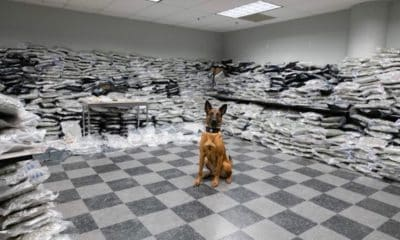police-dog-sniffs-out-10-million-worth-marijuana-one-night-hero-400x240.jpg