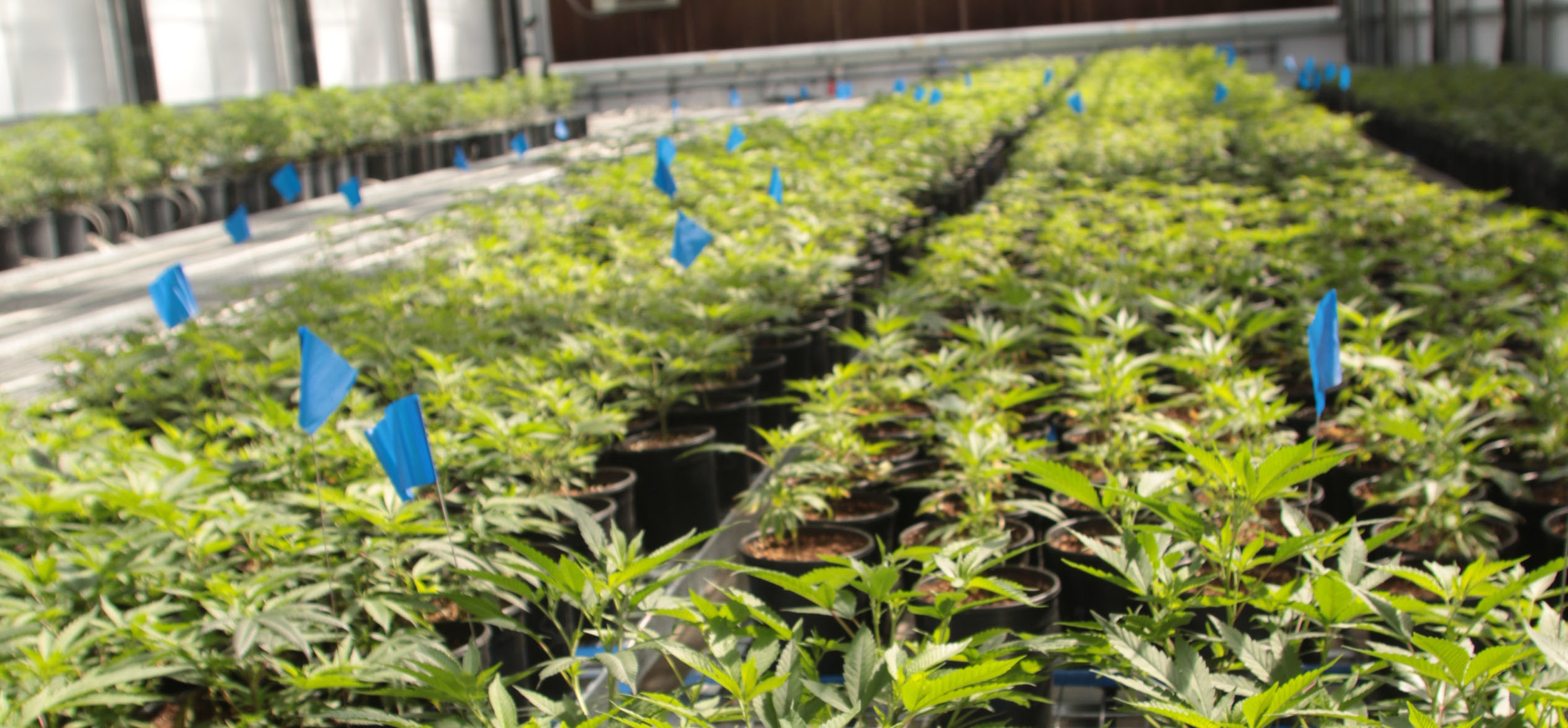 CONFIDENTIAL CANNABIS CULTIVATOR -