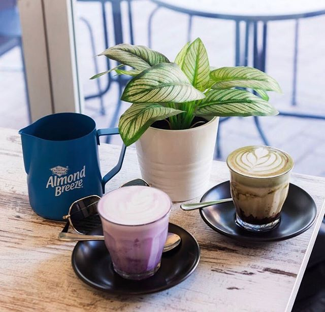 😋Dairy-free treats! 🤩🍬 🥛We have Almond-breeze/Bonsoy/Milk Lab options available in store🥳 . . . 📸 by @sharonwhooo . 🥰@baristablendaus . 💜Purple sweet potato latte with Almond-breeze barista blend 💚Matcha-Chocolatey with Almond-breeze barista blend . . . . #vegan #dairyfree #drinks #healthy #coffee #sweets #cafe #drink #asian #korean #greentea #matcha #matchalatte #chocolate #almondmilk #soymilk #latteart #light #delicious #yum #warm
