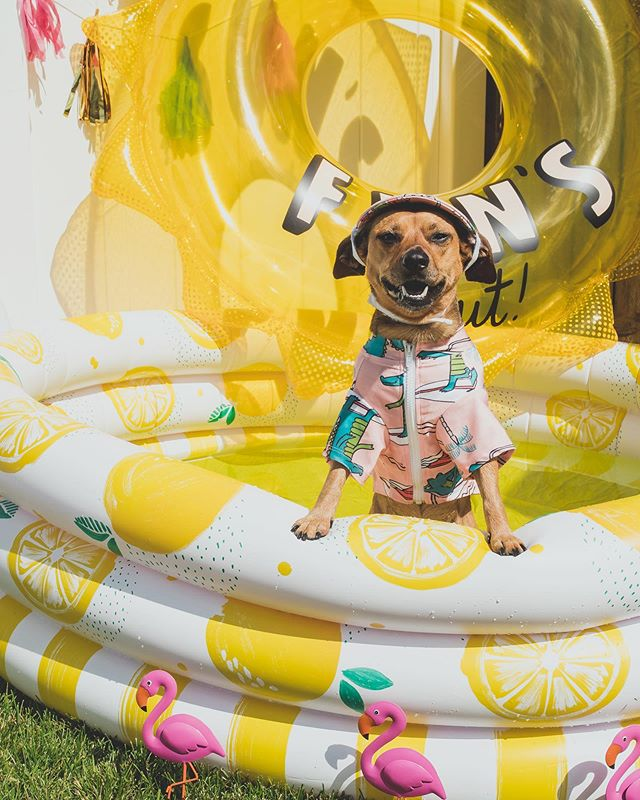 ☀️: we've teased it for awhile now and it's finally time to announce that we'll be releasing our summer issue of pawlished this thursday. who's excited to shop the best summer dog fashion around? 🛍: Rashi + Hat from @pablo.and.co