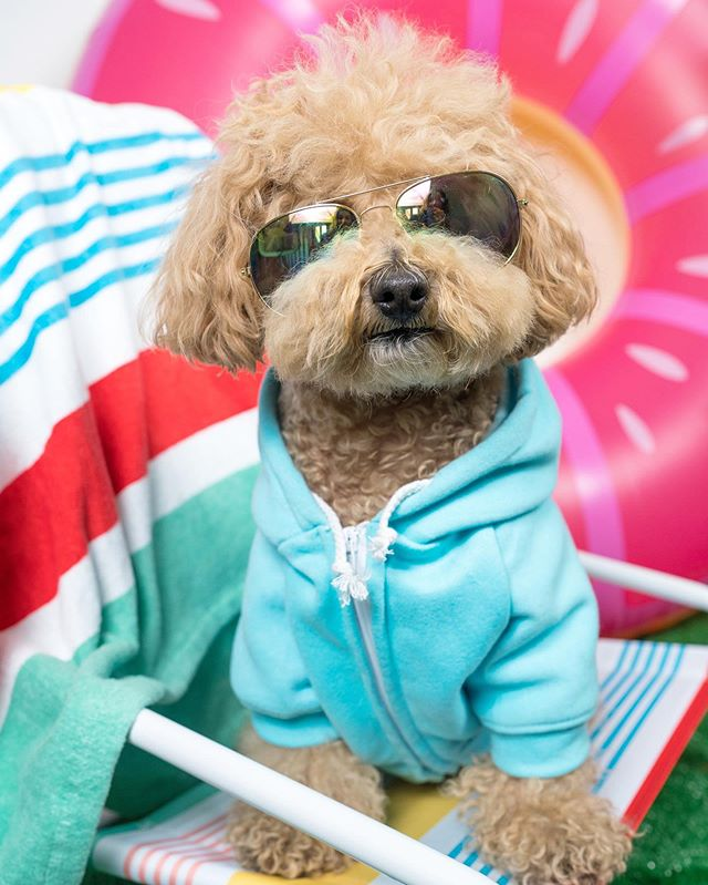 🏄🏼♀️: summer isn't over yet, bitches! it's still hot AF outside and it's only gonna get HOTTER, especially with the fashions in our brand new issue of pawlished! click the link in the bio, browse through the styles, and click the blinking dots if you like what you see! 🛍: hoodie from @woofoutwest ••• ❤️: huge thank you to all of the fabulous brands we worked with on this issue - @barkshop @canadapooch @chompersandsons @dogahead @dogloverepeat @finnandmecollection @hummus.and.soysauce @themaxbone @miamorepets @nicedigs @pablo.and.co @pawmiscuous @pink_papyrus @ripleyandrue @sebastian.says @wagcityclothing @shopwaggo @woof_and_wild @woofoutwest and @wrooof_pet!