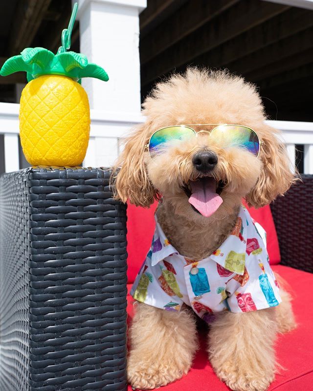 ☀️: never underestimate the power of a good outfit on a monday. check out the hottest summer fashion in the latest issue of Pawlished - link in bio! 🛍: @chompersandsons