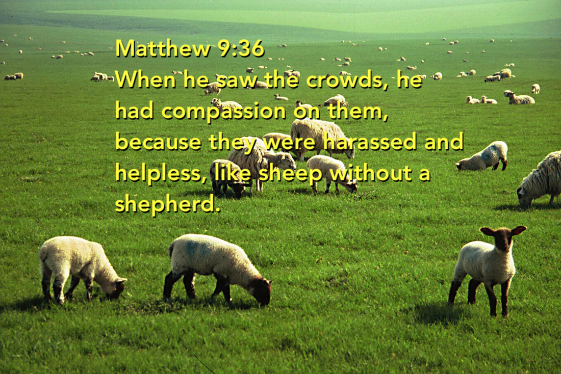 sheep-graze-nofence.jpg