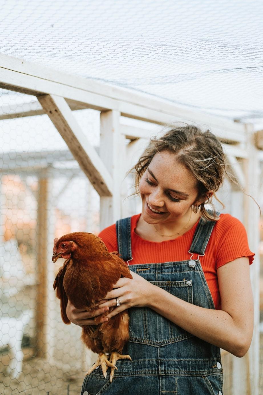 Chicken alive.jpg