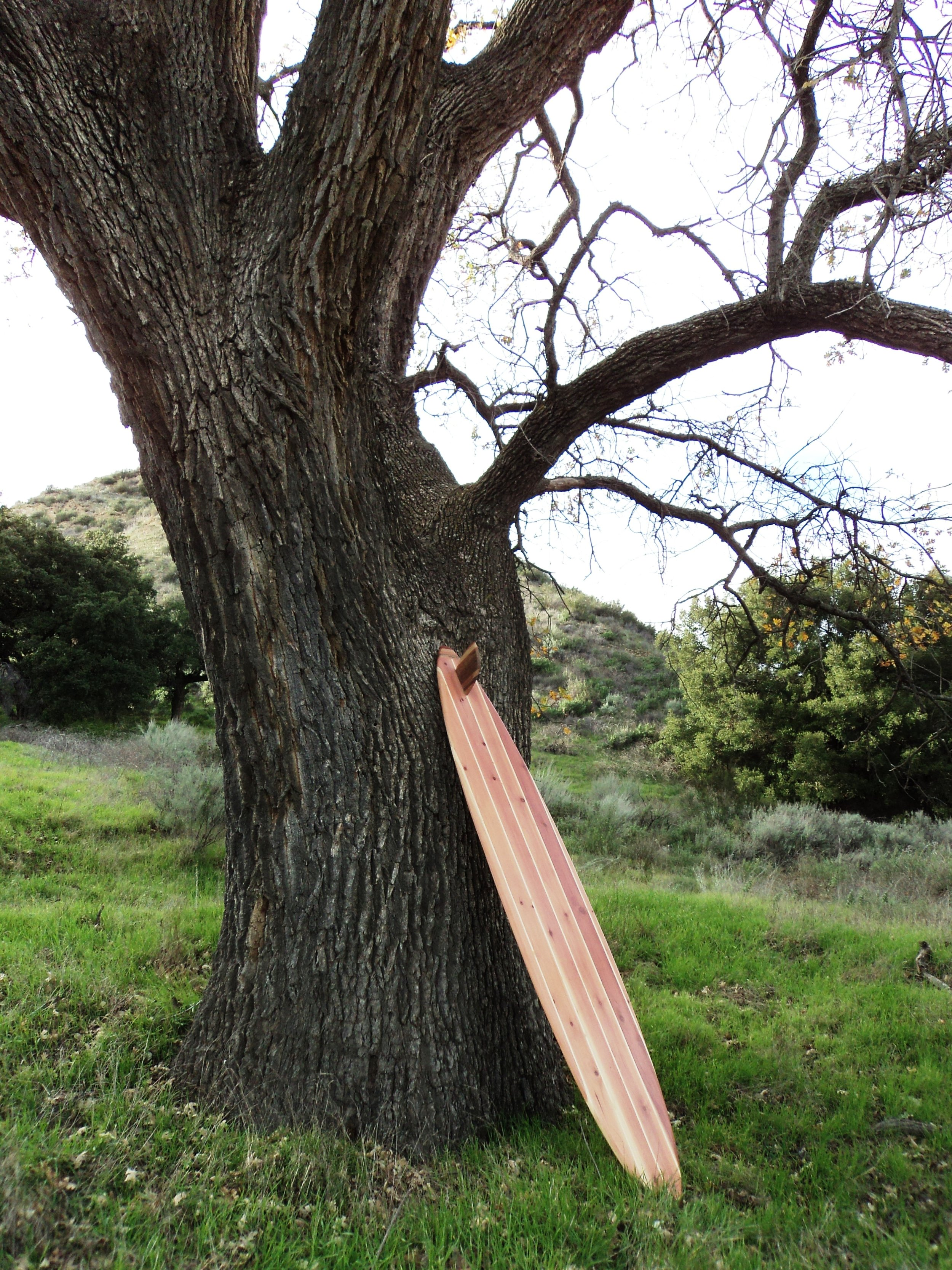 Nature wood surfboard photo shoot 046.jpg