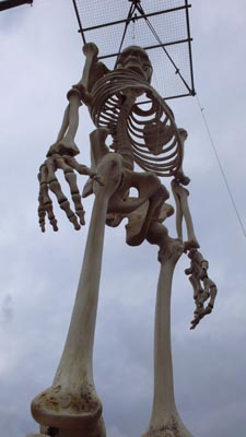 skeleton_11.jpg