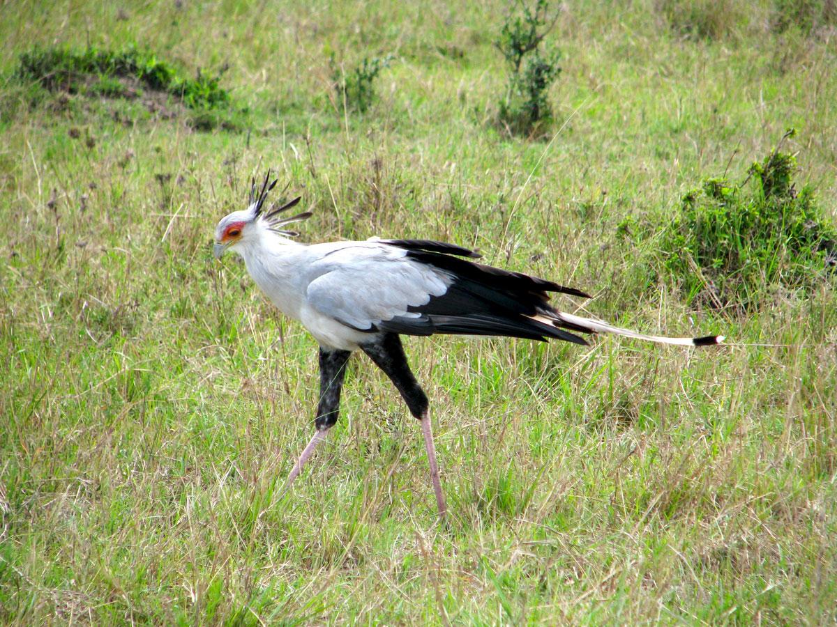 赤道超えて・ケニア満喫7日間 - 全行程サファリカーで赤道直下のケニアを北から南へ周遊するサファリツアーです。赤道北部に位置するサンブルでは南部ケニアとは気候が異なる為他公園では見られない独特の動物が生息しています。