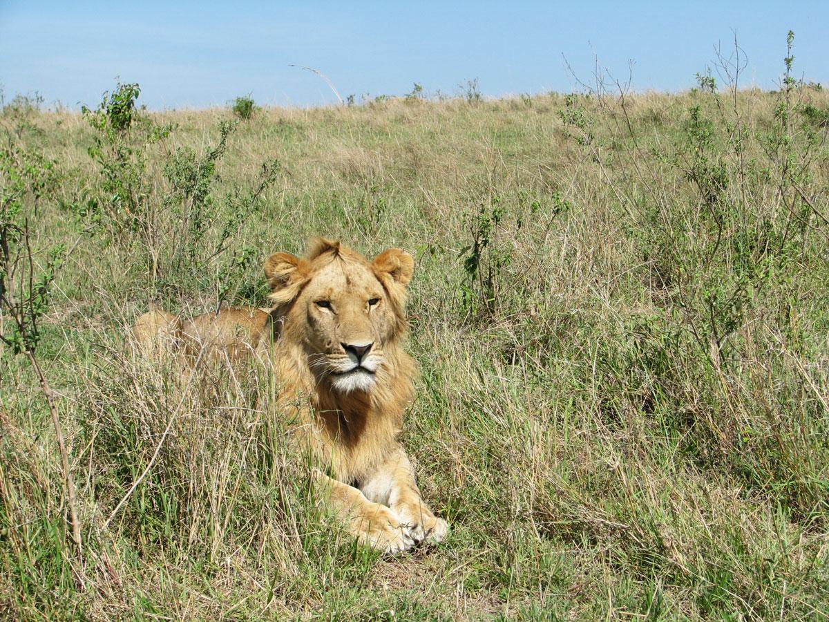 パッケージA - ケニア国立公園・国立保護区王道7日間