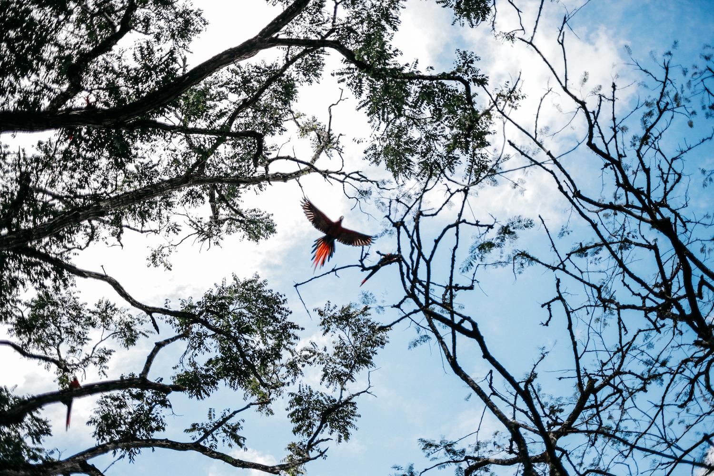 JamesBFeatherstone_Honduras-2 (1).jpg