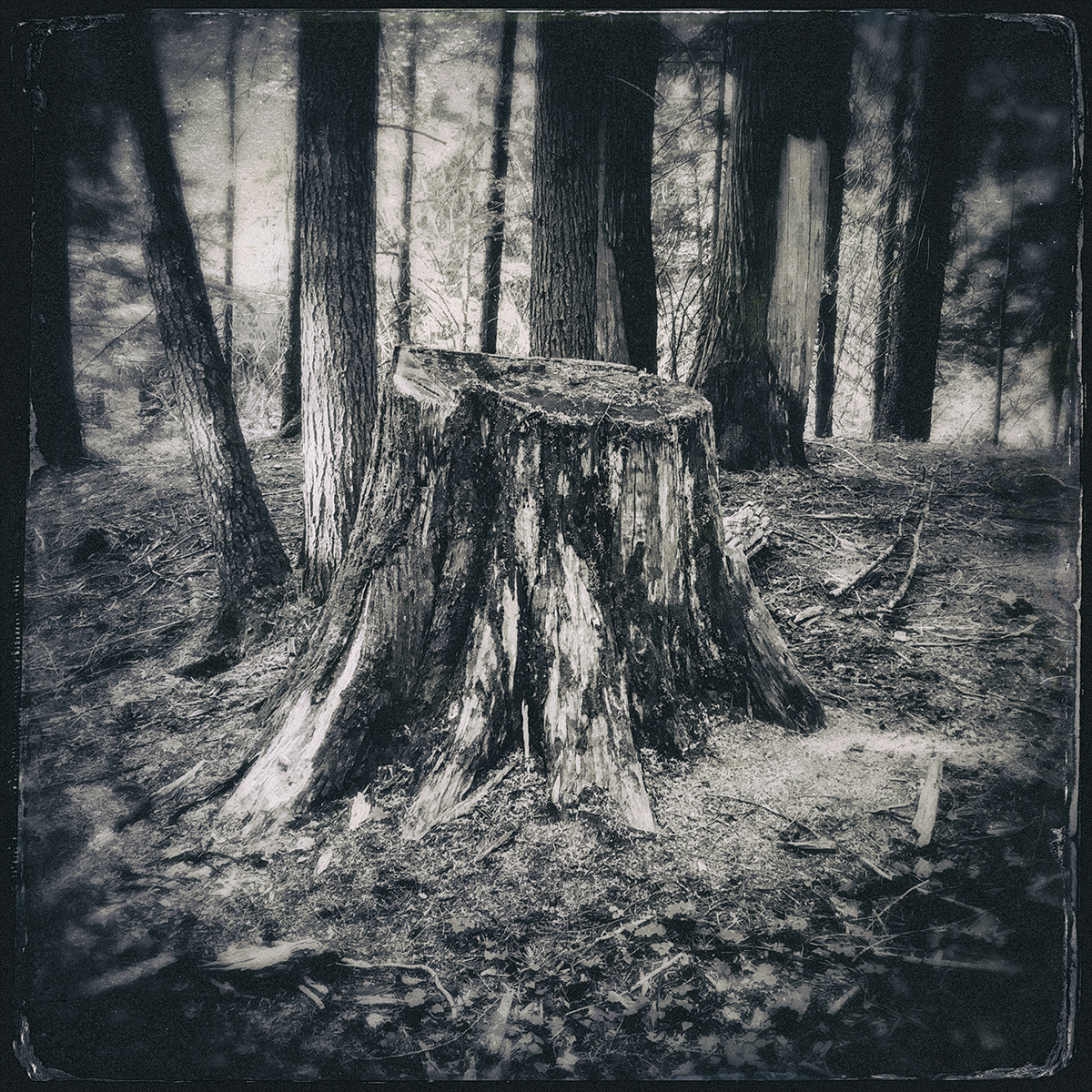 Forest of Lost Trees 2 72dpi .jpg
