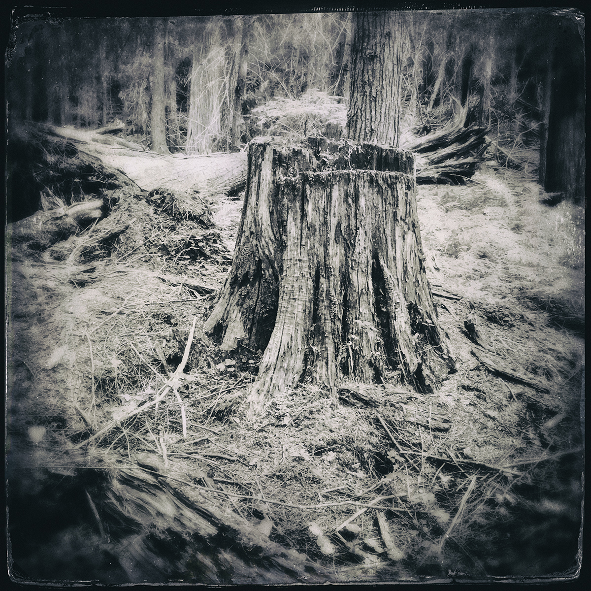 Forest of Lost Trees 6 72 dpi .jpg