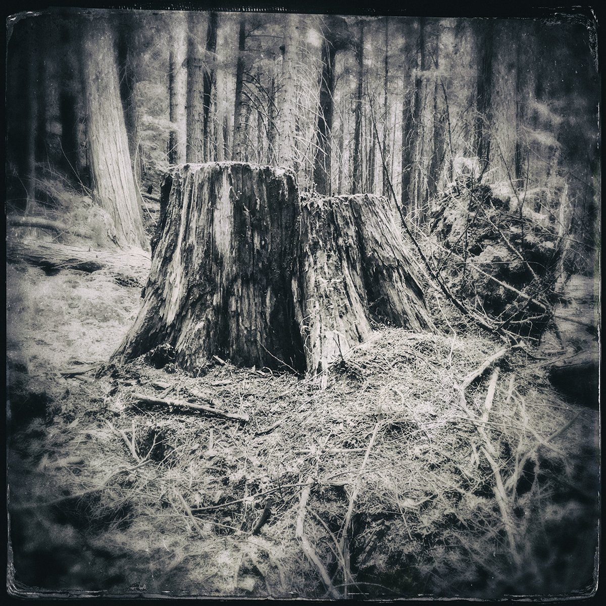 Forest of Lost Trees 7 72dpi.jpg