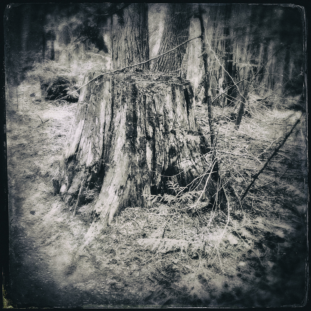 Forest of Lost Trees 12 72dpi.jpg