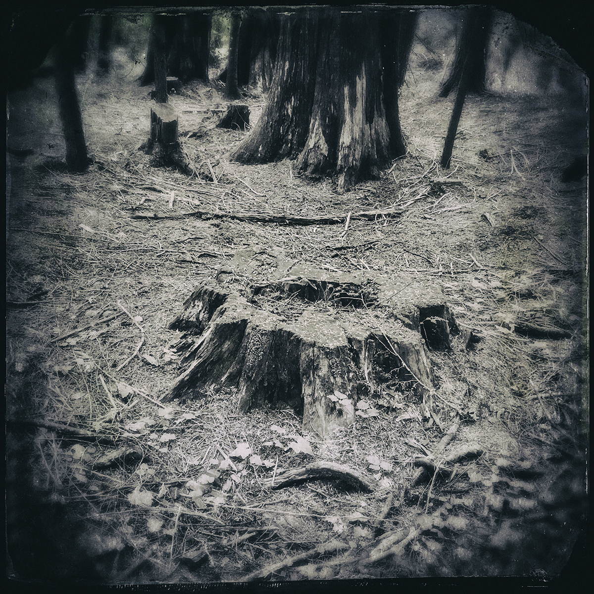 Forest of Lost Trees 14 72dpi.jpg