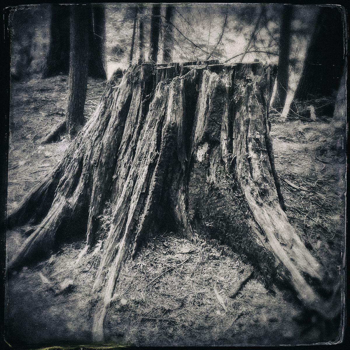 Forest of Lost Trees 16 72dpi.jpg