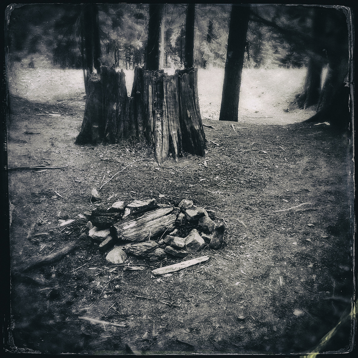 Forest of Lost Trees 18 72dpi.jpg