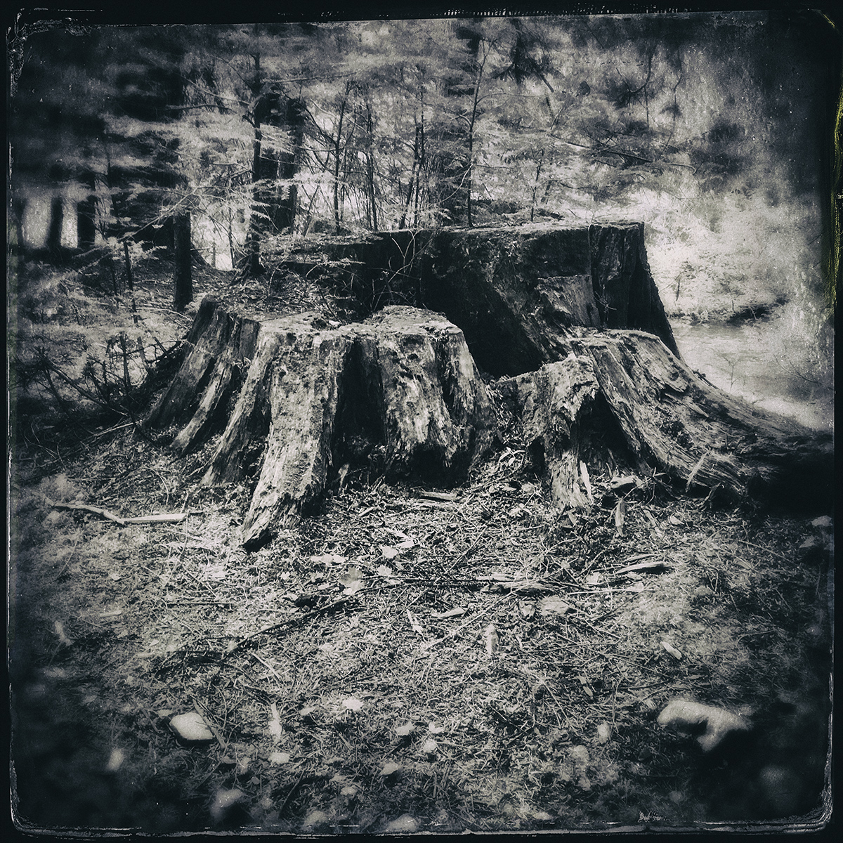 Forest of Lost Trees 17 72dpi.jpg