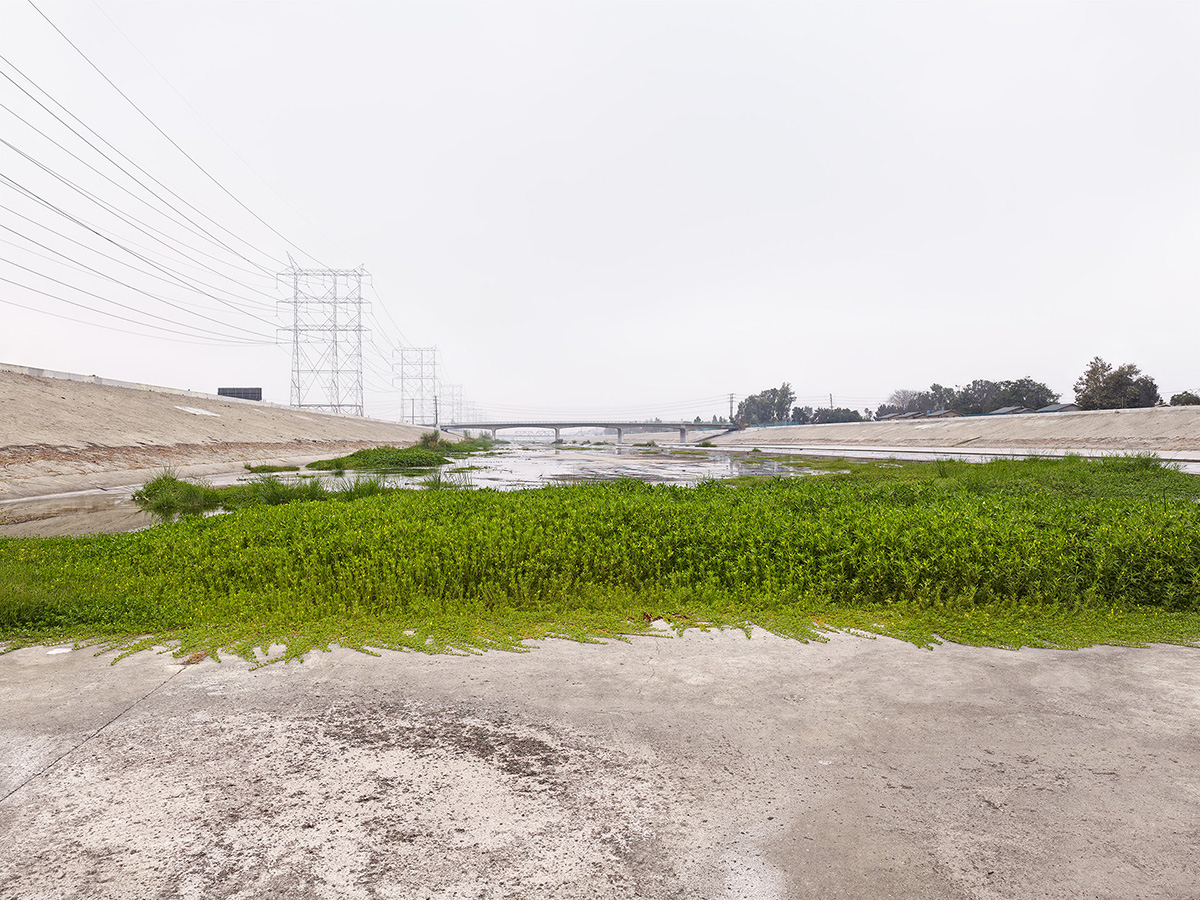 Moss on L.A. River, California.jpg