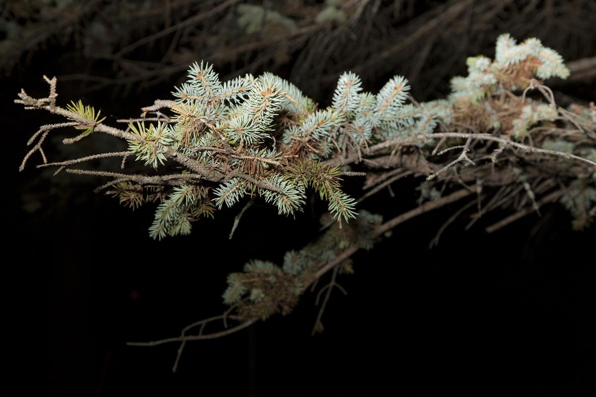 Branch_at_Night.jpg