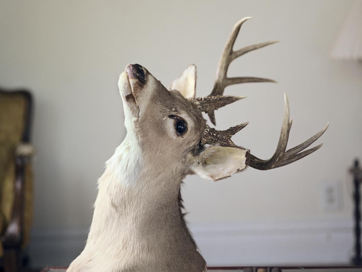 Deer_Head.jpg