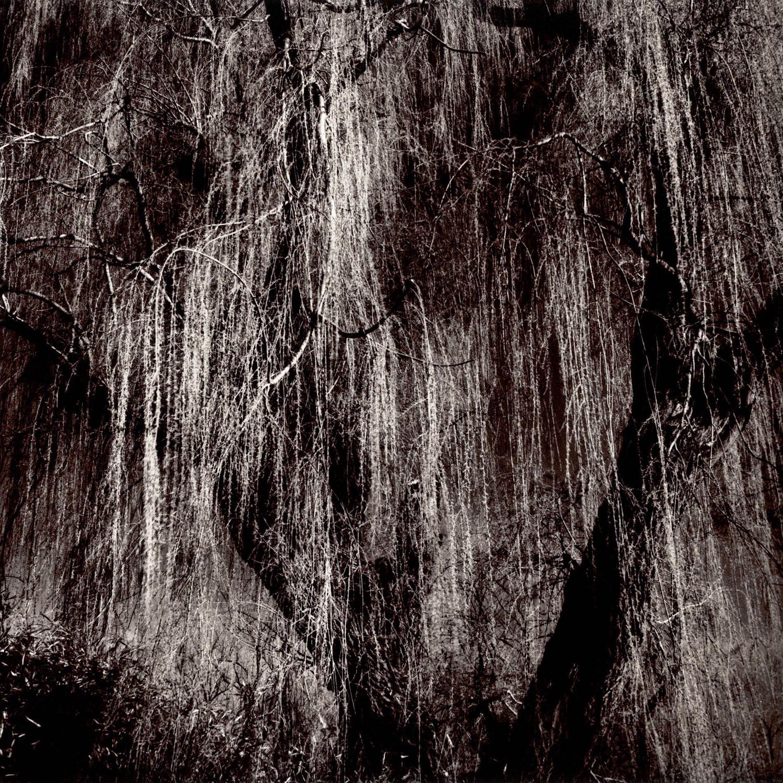 Willow .jpg
