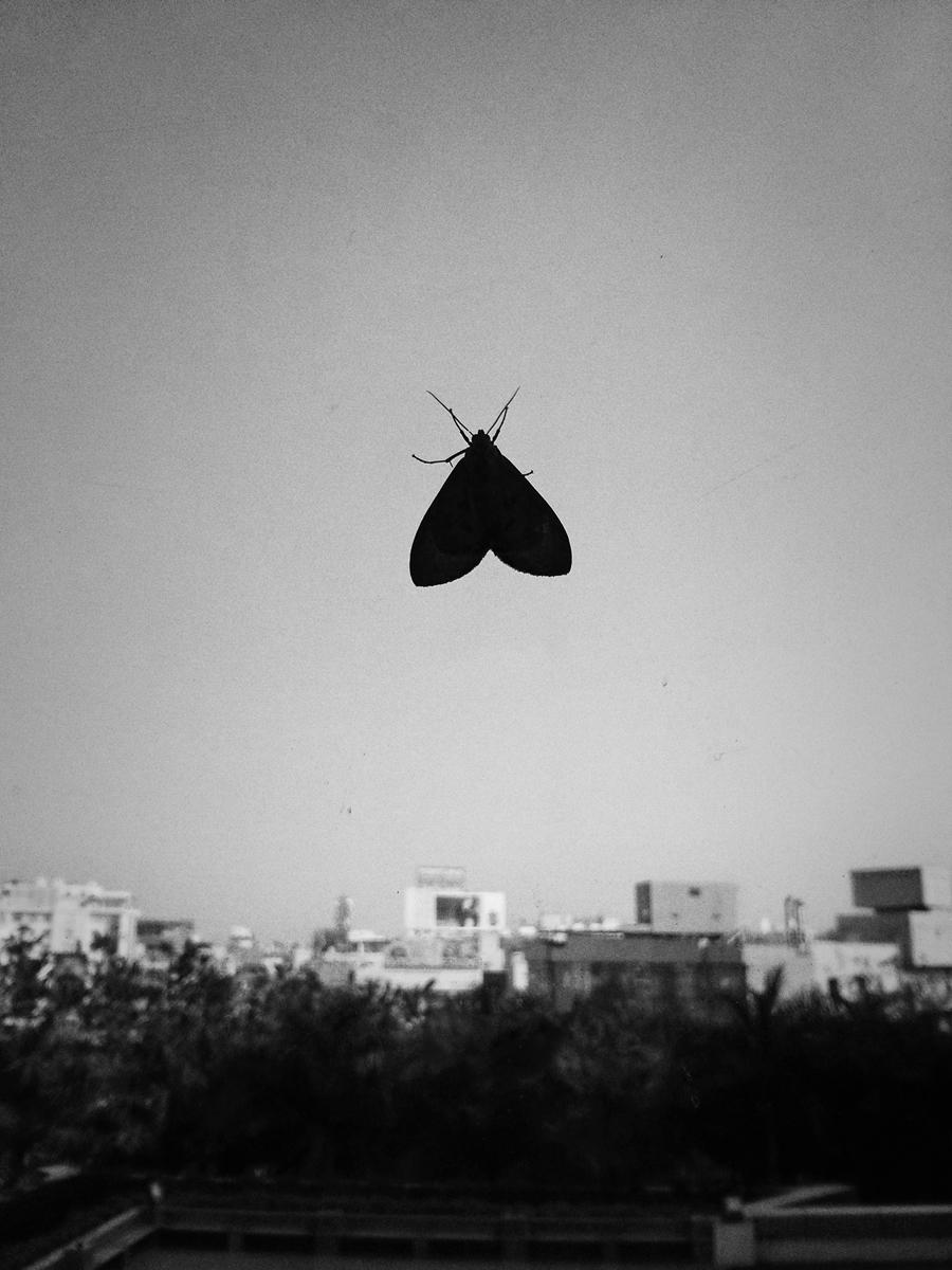 wings5.jpg