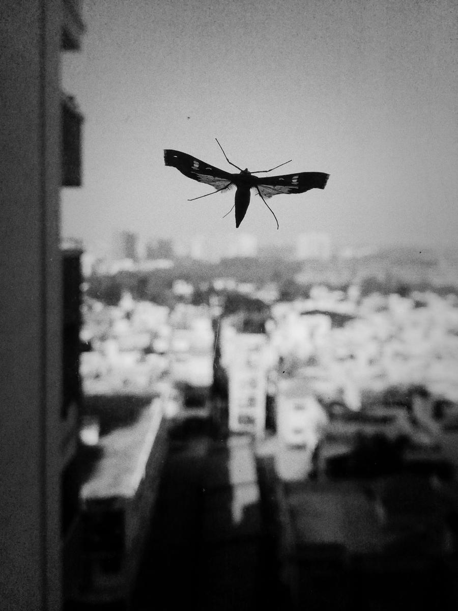 wings6.jpg