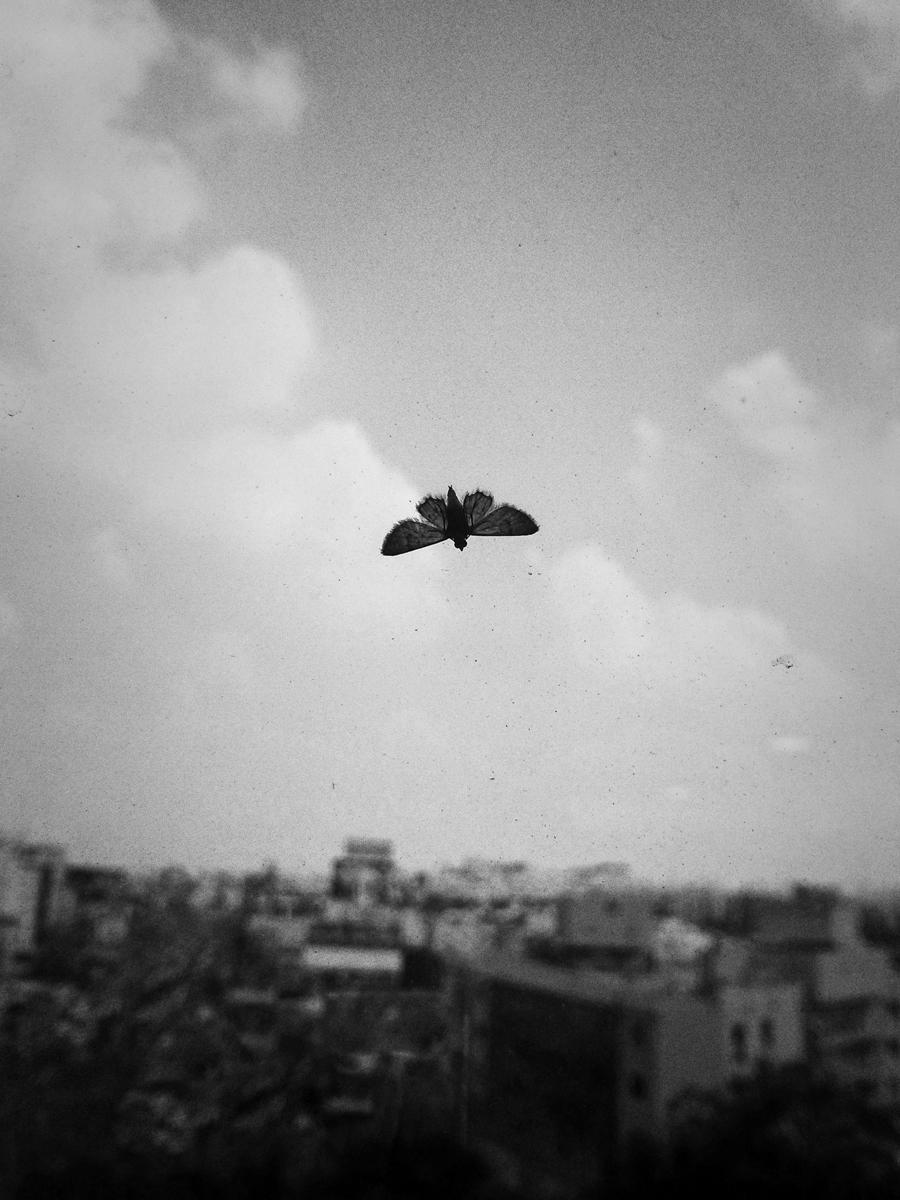 wings7.jpg