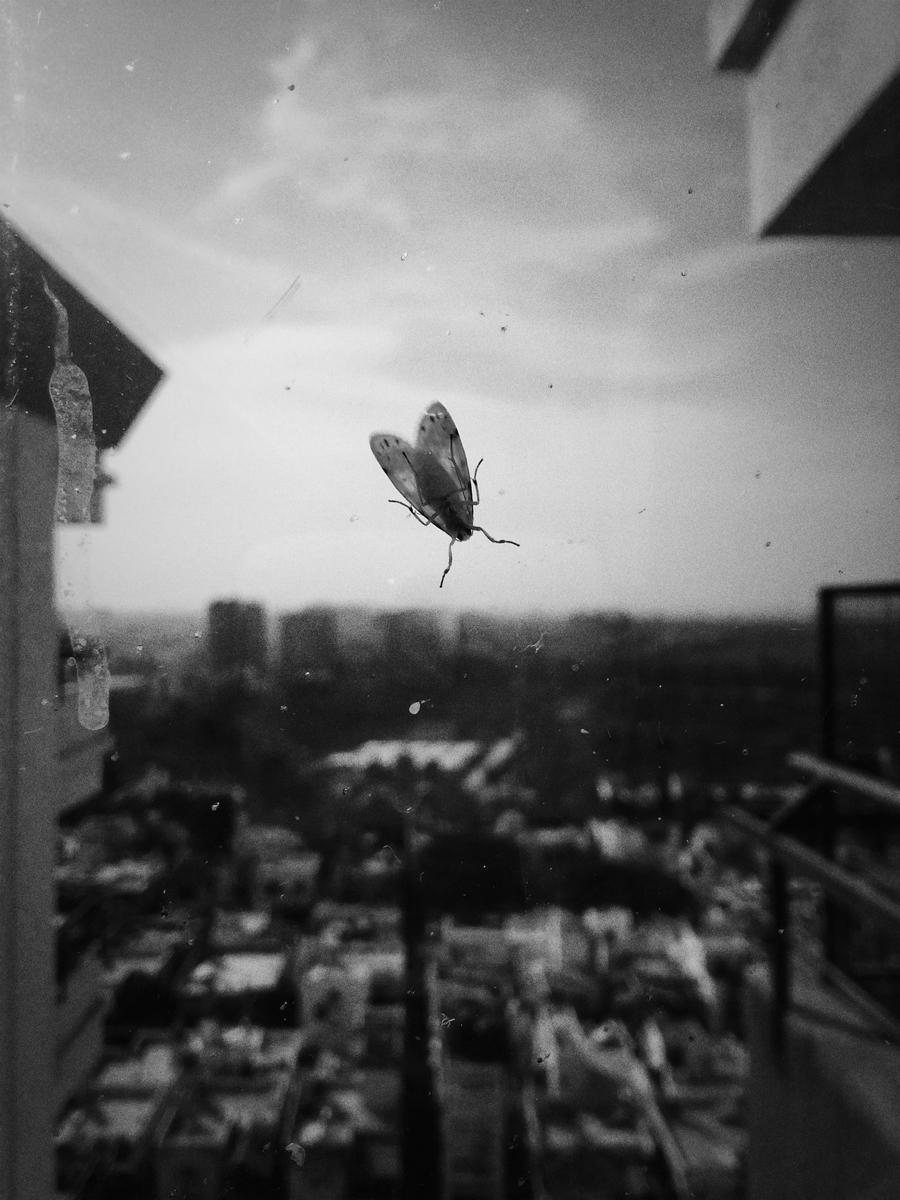 wings8.jpg