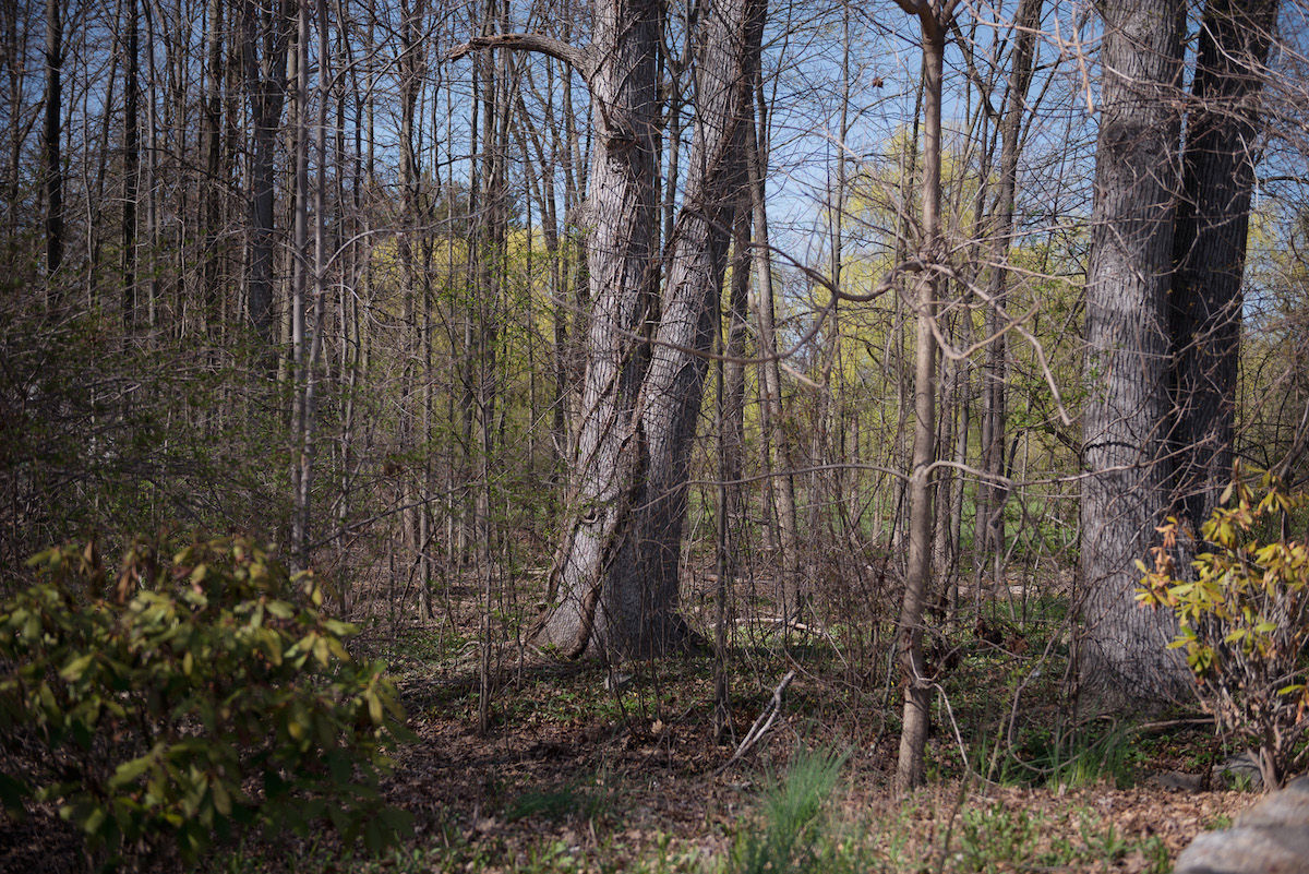 Split_Tree_3_SplitTree.jpeg