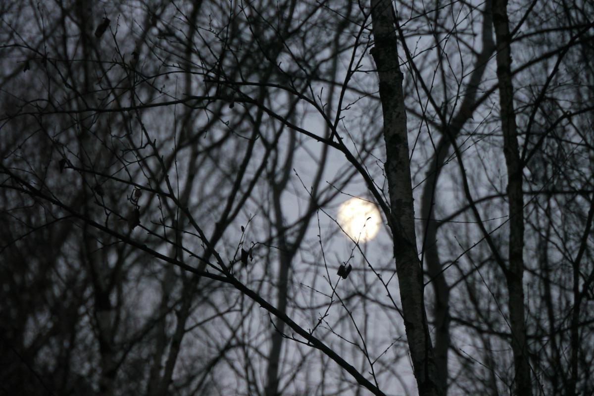 Split_Tree_27_MoonoverSplitTrees.jpeg