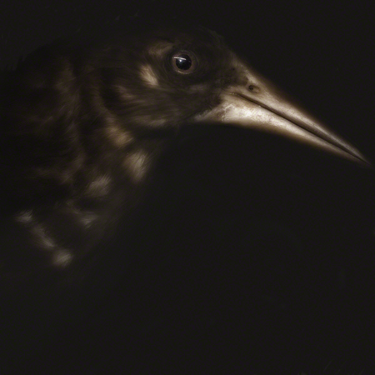 Lori Pond_THE BIRD.jpg