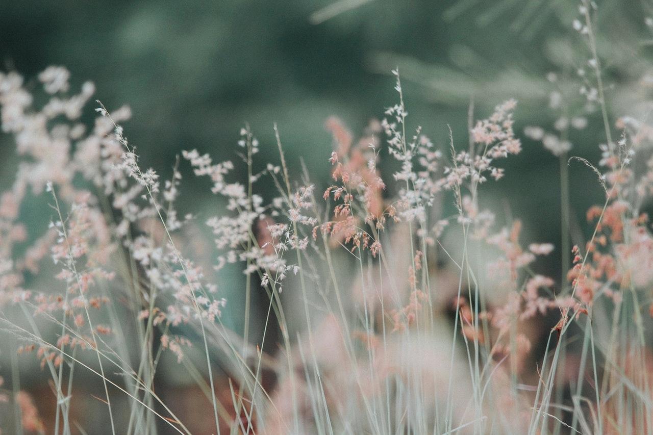 pexels-photo-268261.jpeg