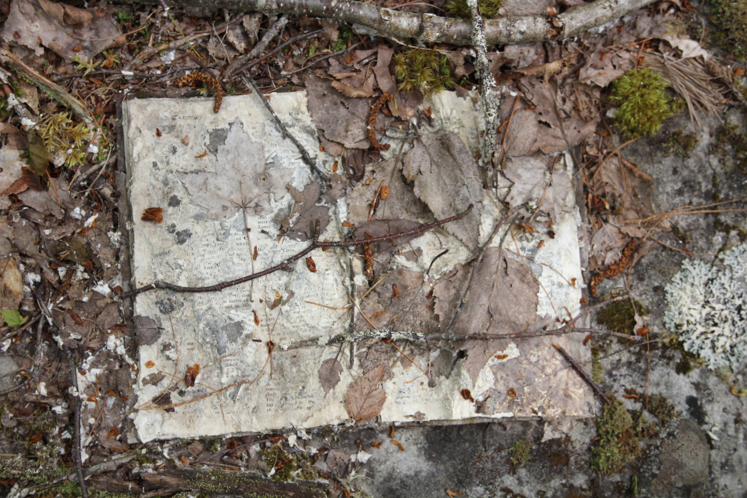 decomposing: History of England  / installation in the woods of L'ketuk (Port Medway, Nova Scotia)