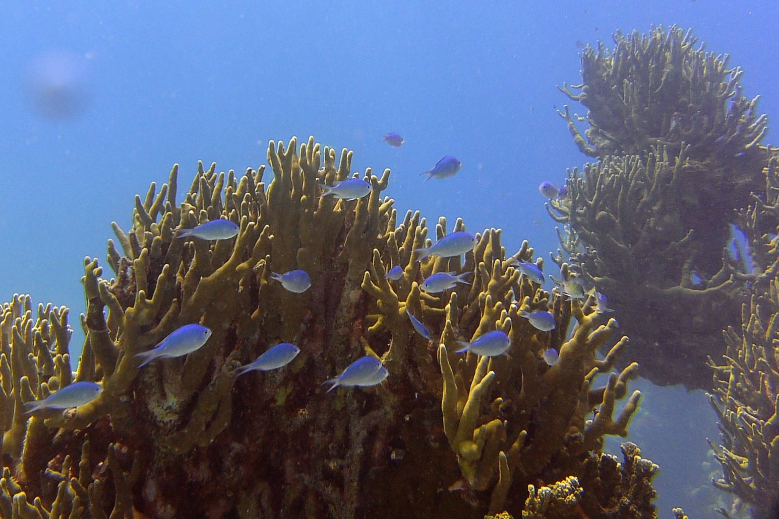 Dive7.jpg
