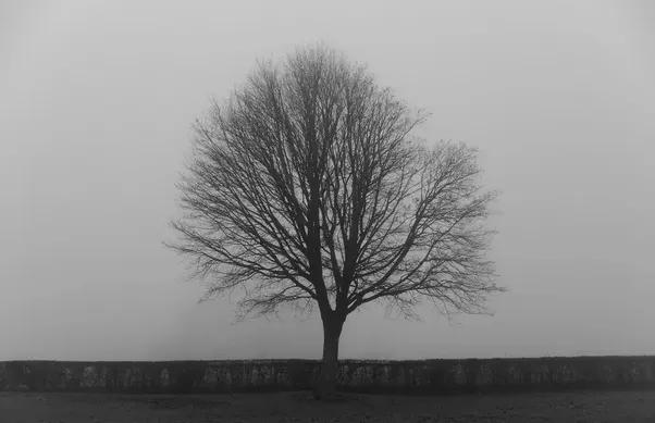 Sad Tree.png