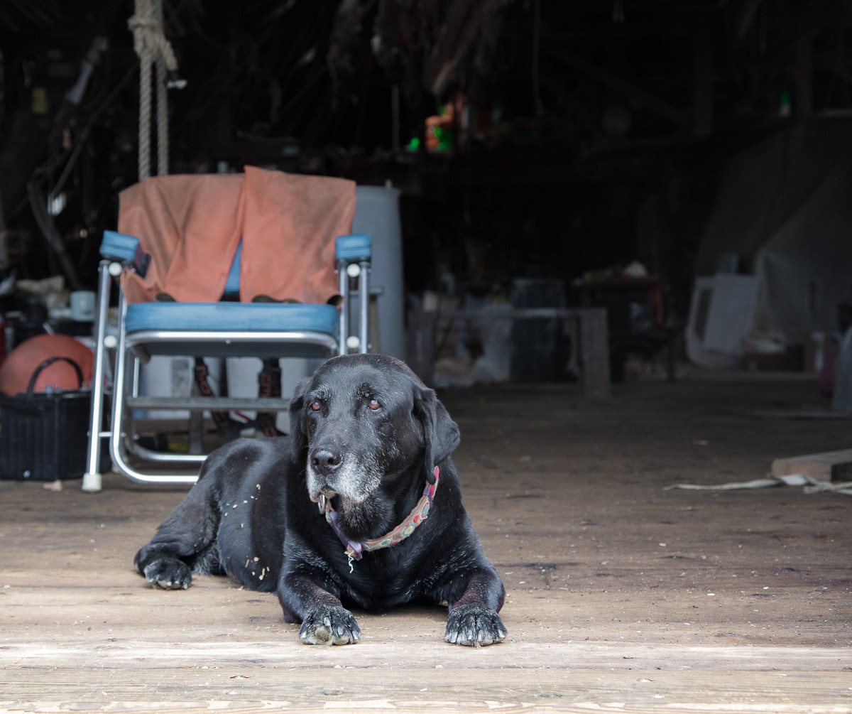 boatyard-dog-north-haven-maine.jpg