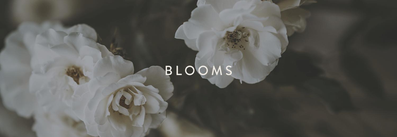 SPRIG-site-bloomsbanner.png