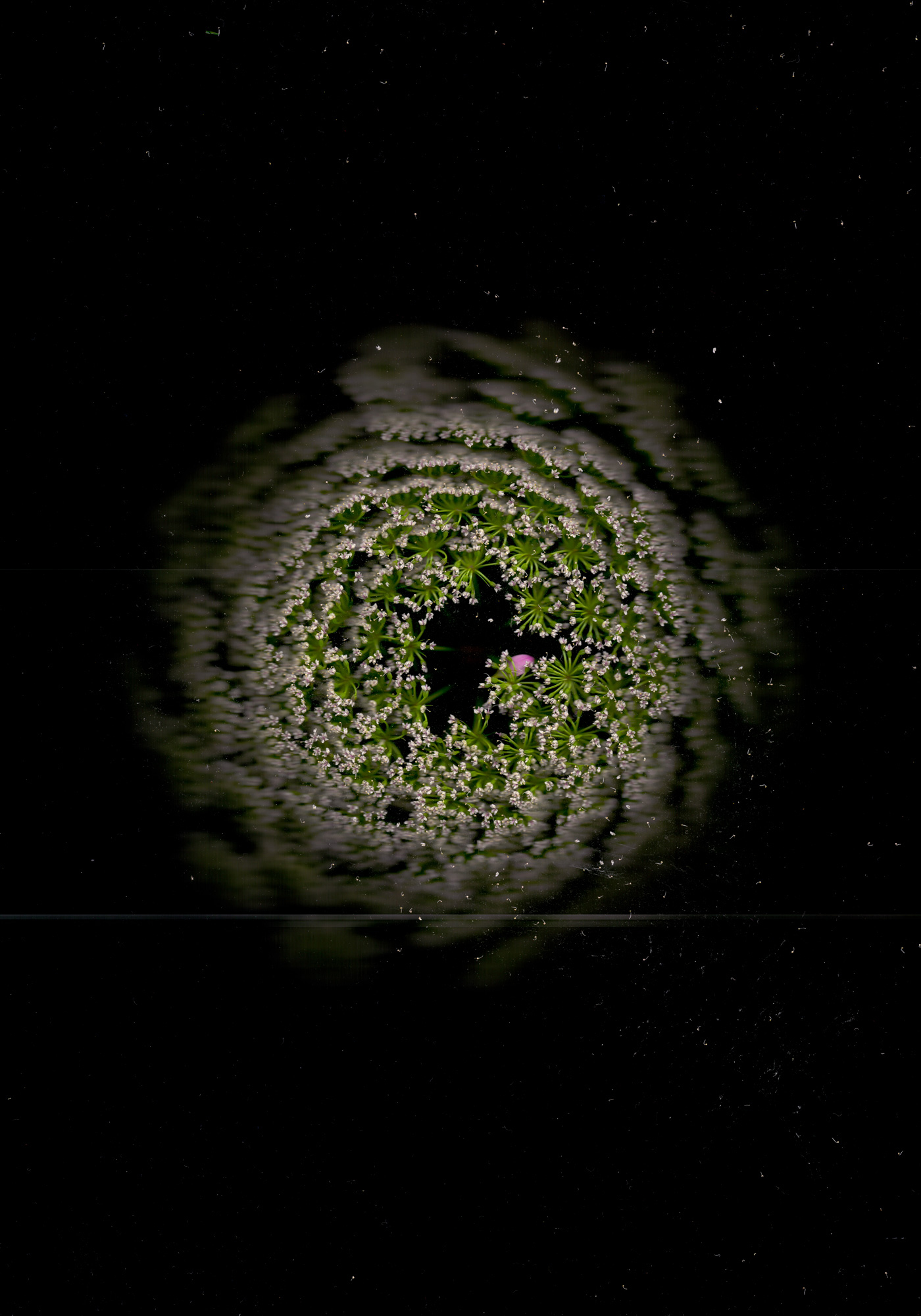 COSMIC-LONE-STAR.jpg