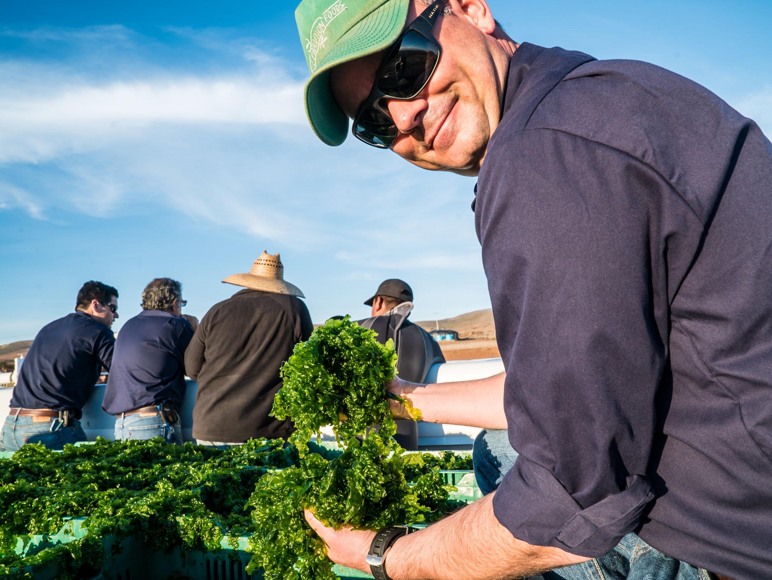 Beau Perry Blue Evolution Sea Lettuce