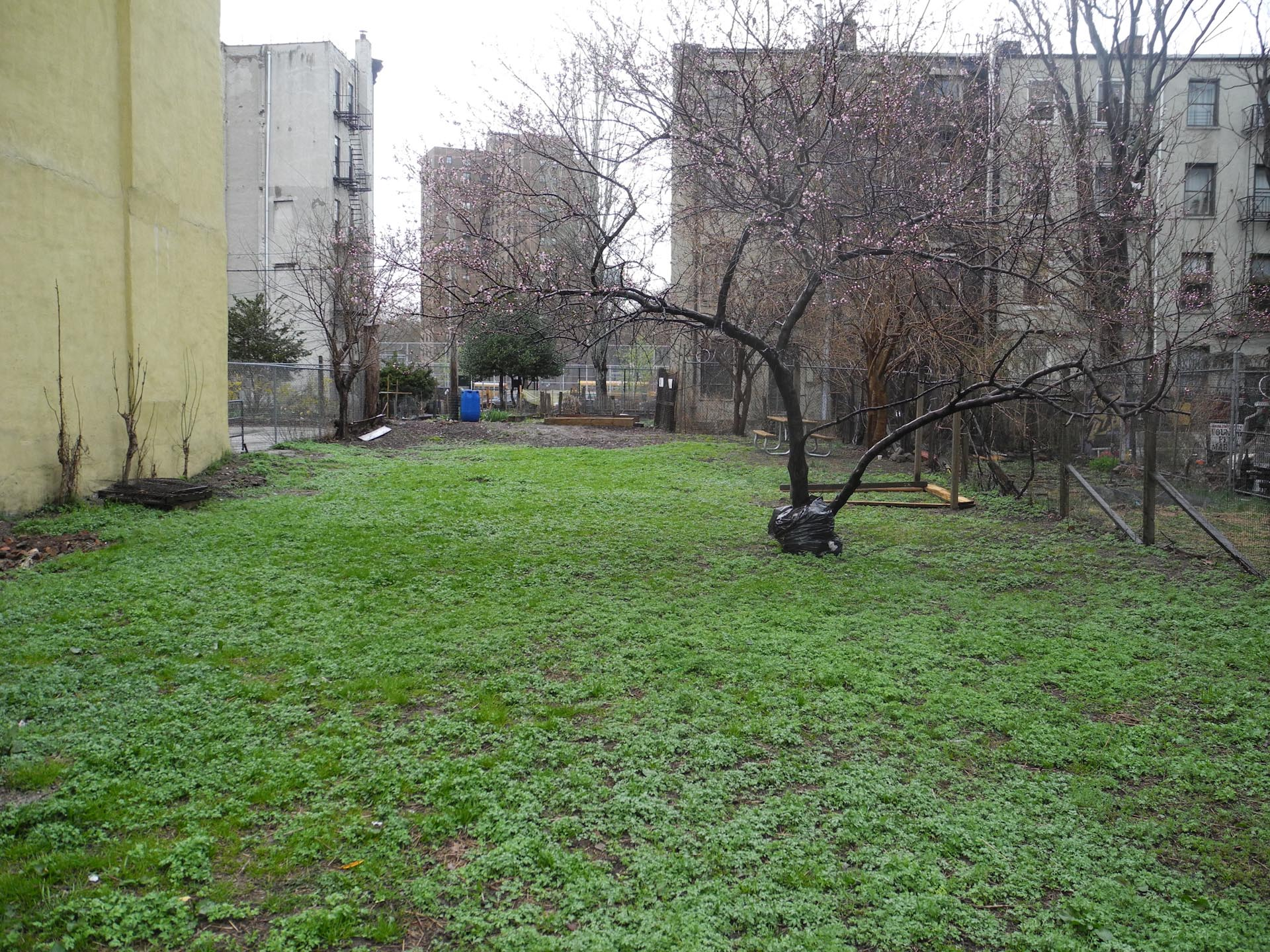 Photo from Christine Johnson, of Pleasant Village Community Garden, the HPD land of PVCG as an empty lot.
