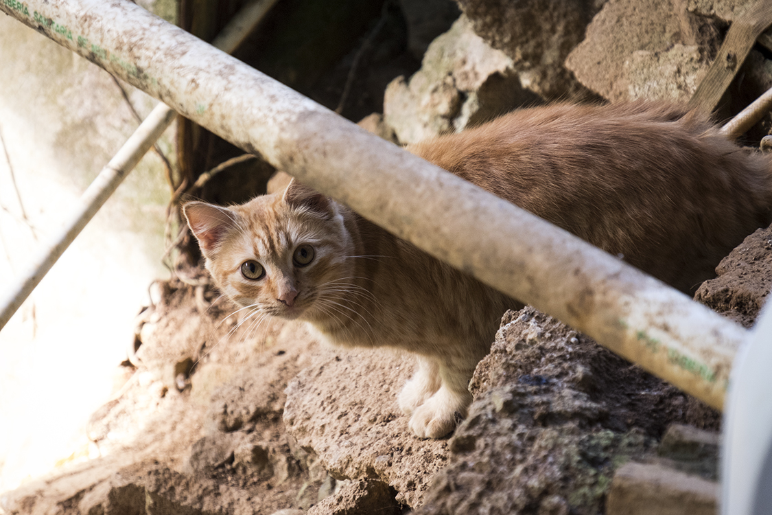 A cat makes its way through the rubble of what was part of a house.