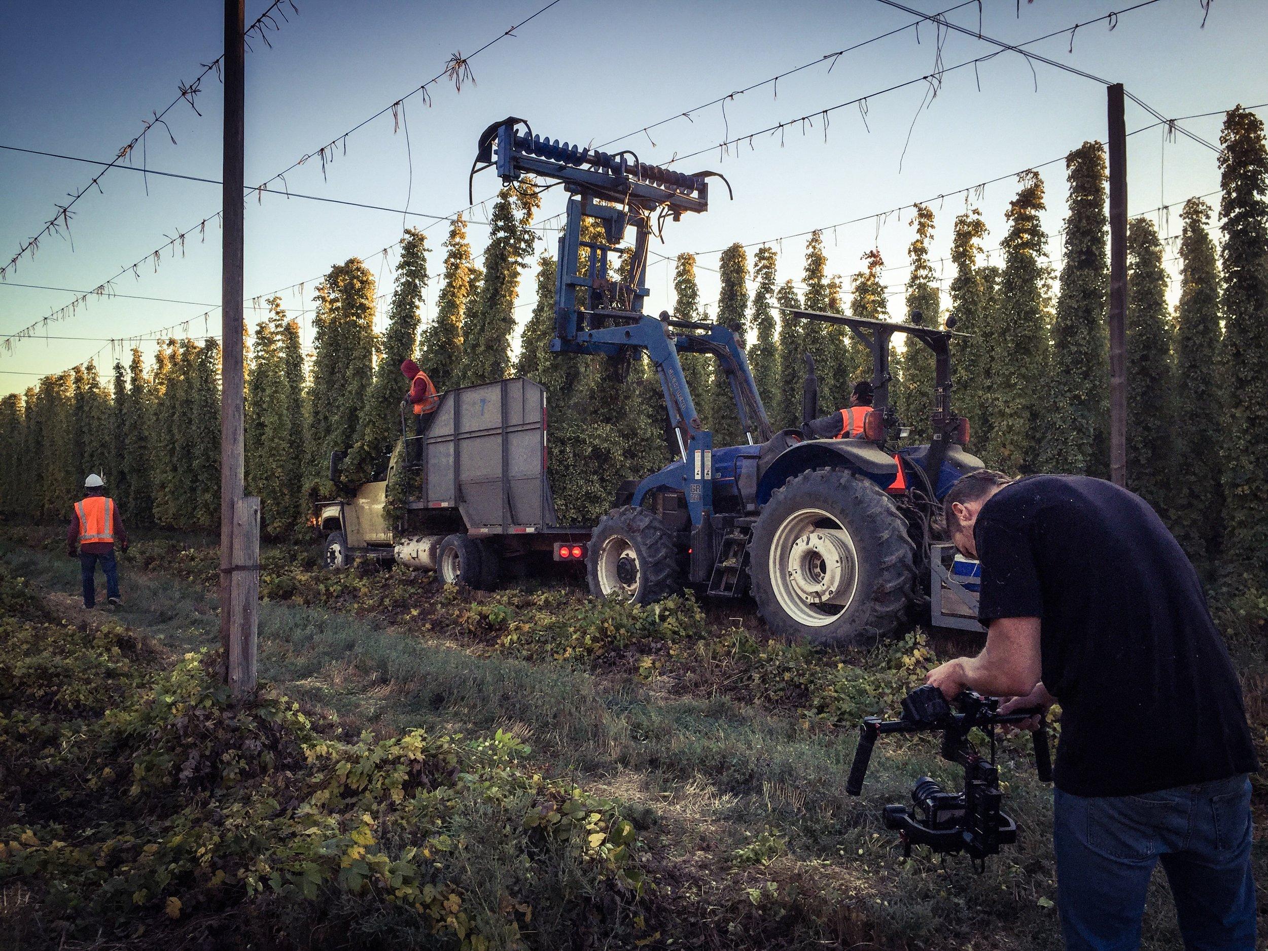 Hop Field Harvest Top Cutter Loftus Farms Yakima Valley