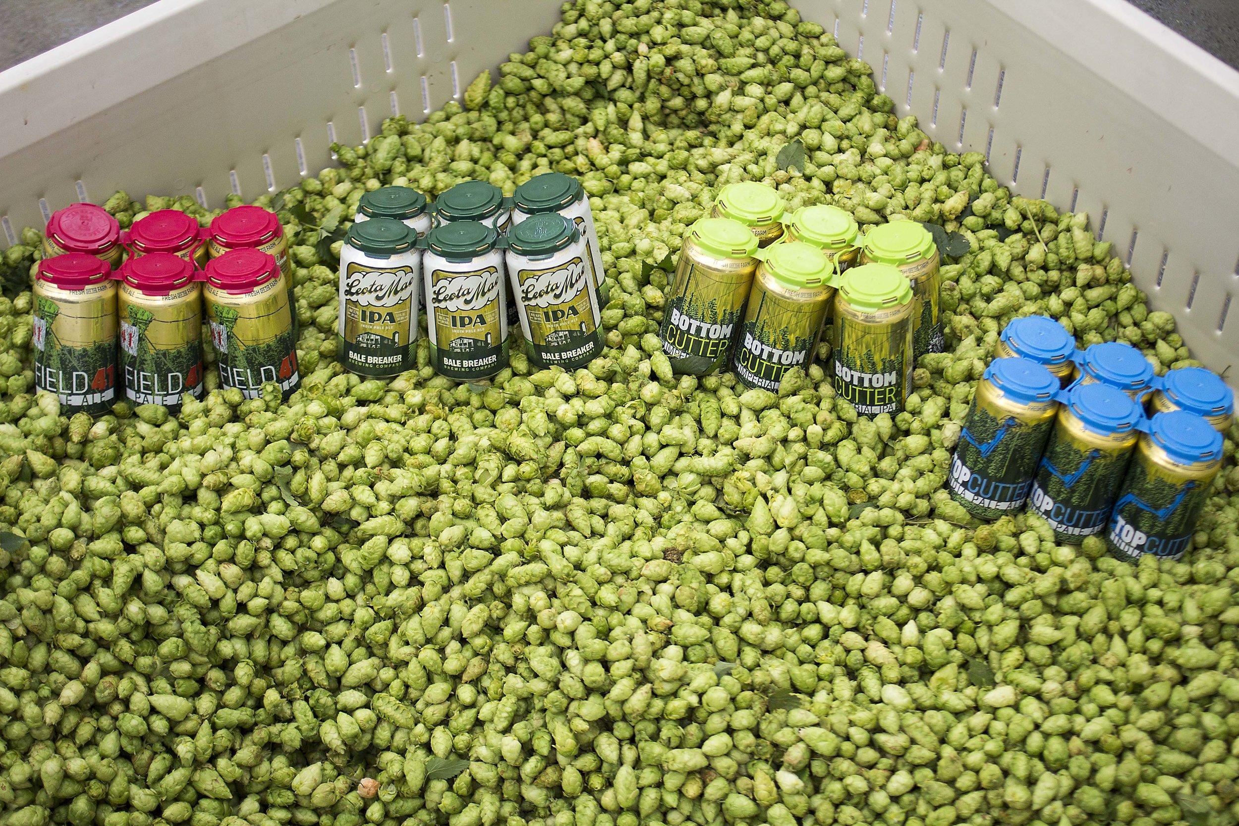 Bale Breaker Brewing Company Yakima Craft Beer IPA