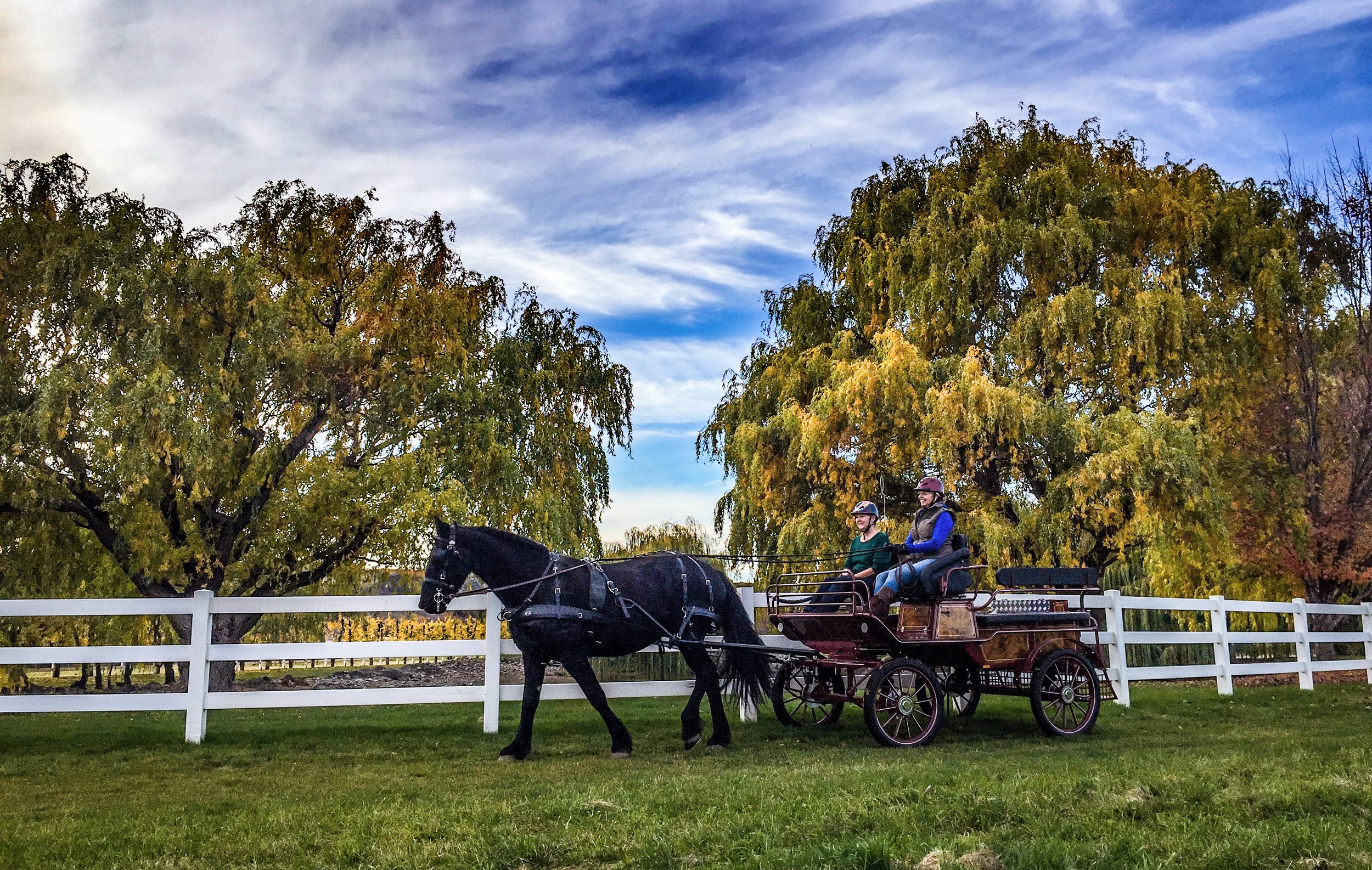 Horse Carriage Pegasus Project Yakima
